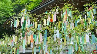 七夕の「竹」と「笹」